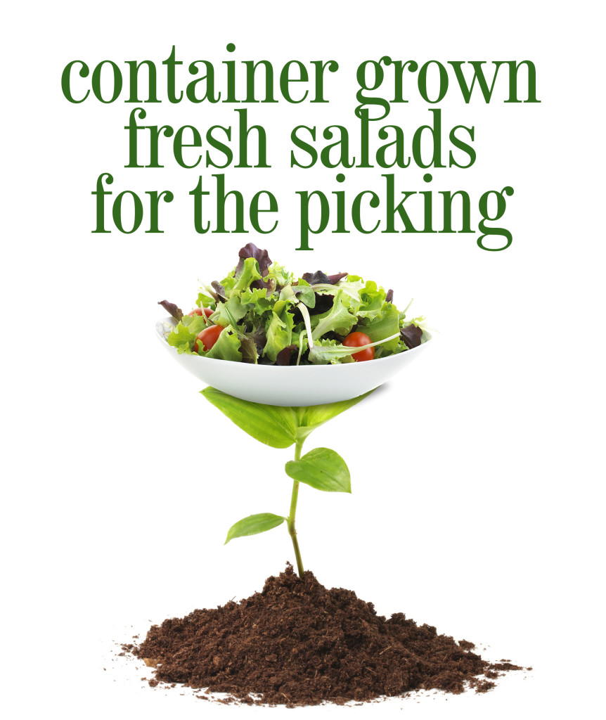 Grow Your Own Salad in Containers